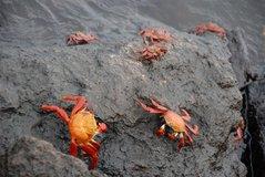 galapagoseilanden2006