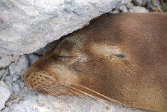 galapagoseilanden2011