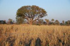 malawi2117