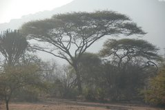 malawi2141
