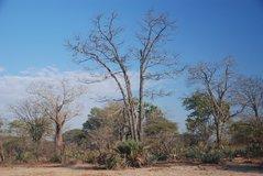 malawi2147