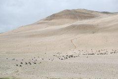 tibet1066