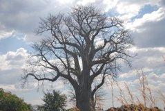 zambia5016
