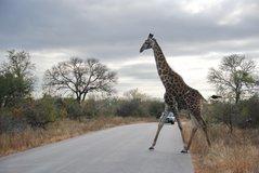 zuid-afrika2032