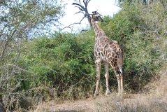 zuid-afrika2036